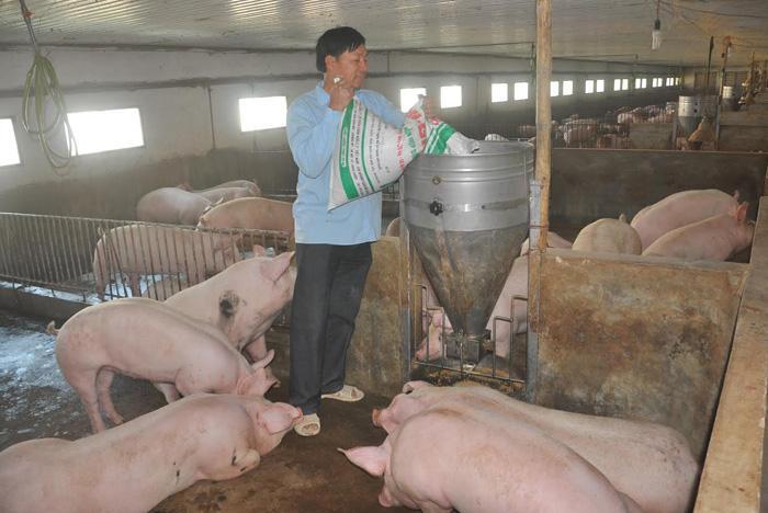 Giá lợn tăng cao, nhiều hộ dân tiếc nuối vì không còn lợn để bán