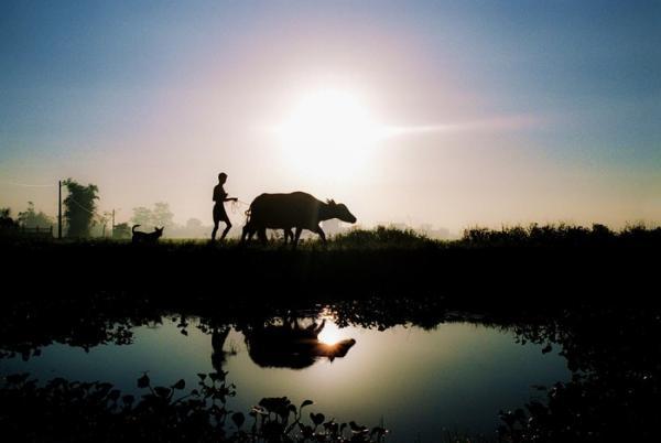 Thước ảnh đẹp lung linh biết bao về một vùng quê Thái Bình an yên. (Ảnh: Trần Đình Trọng)