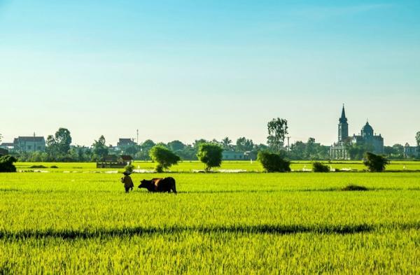 Cảnh vật yên bình đẹp miên man ở huyện phía Đông tỉnh Thái Bình. (Ảnh: Nguyễn Trọng Bằng)