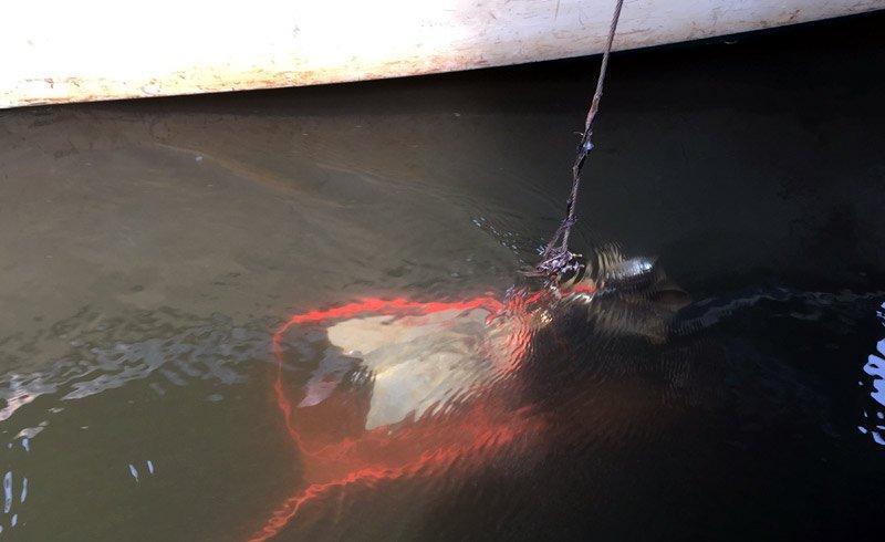 Thả dụng cụ đo nước xuống đáy sông.