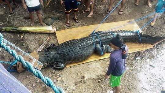 Chính quyền tỉnh Palawan hôm 1-12 bắt được một con cá sấu dài 4,7 m, nặng khoảng 500 kg. Ảnh: Rappler