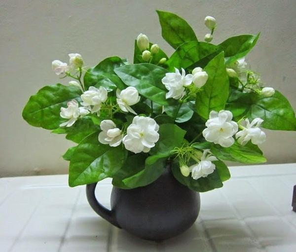 Hoa nhài đẹp và rất thơm nhưng cũng không nên cúng trên bàn thờ.