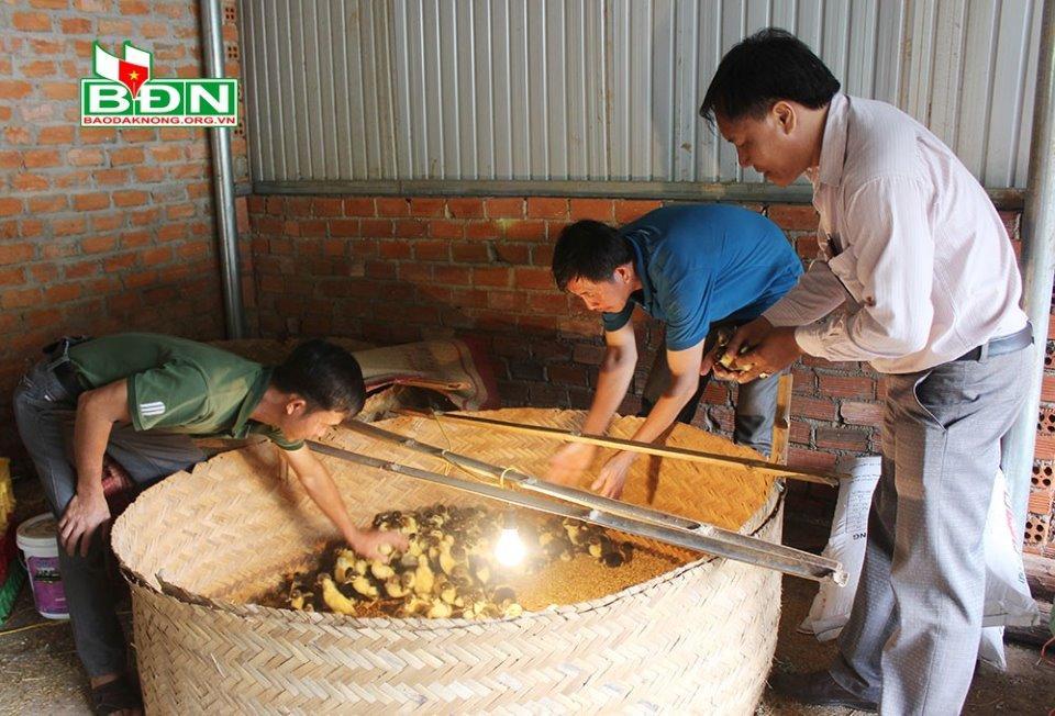 Người dân trên địa bàn đến chọn mua giống gia cầm tại gia đình anh Minh