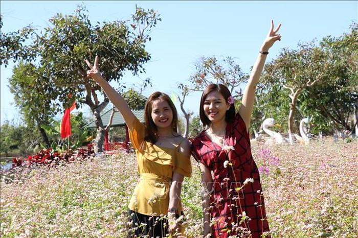 Du khách thích thú tham quan, chụp ảnh lưu niệm tại vườn hoa tam giác mạch.