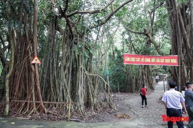 Điểm nổi bật trên đảo là quần thể 37 cây đa búp đỏ được công nhận là cây Di sản Việt Nam. Trên đảo có Đền thờ Đức Nam Hải Đại Thần Vương. Ngôi đền rất linh thiêng đối với người dân Đồ Sơn và ngư dân Duyên hải Bắc Bộ. Đây là hiện thân của đời sống tinh thần, tâm linh và trở thành tập quán, tín ngưỡng gắn với lễ hội trên đảo.
