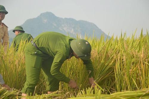 Lao động như những nông dân thực thụ.