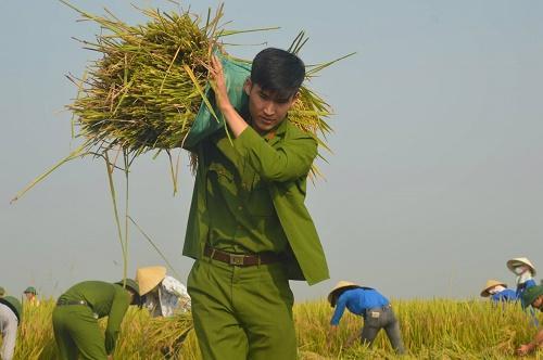 Chiến sĩ công an không ngại xuống đồng vác lúa giúp dân.