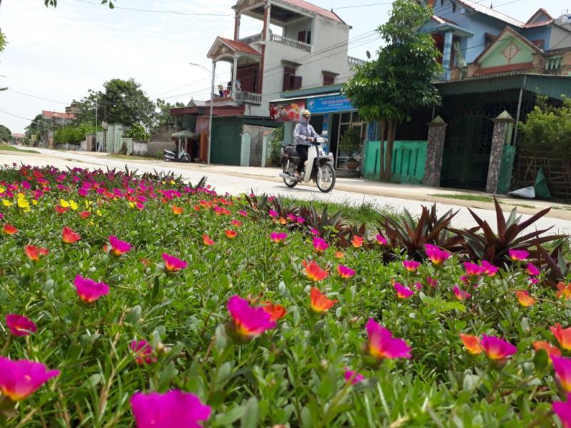 Đến nay, gần 100% đường trong thôn không còn cỏ dại, rác thải cũng được các hộ ý thức thu gom, nhường chỗ cho các loại hoa đua nhau khoe sắc.