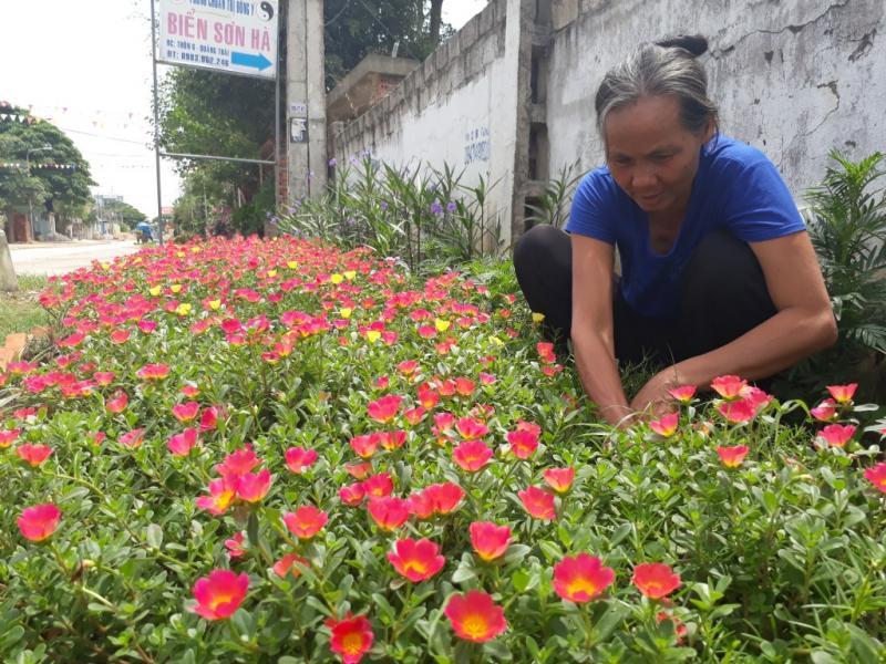 Hoa sau khi được trồng sẽ được giao cho các hộ dân sống gần đó tự chăm sóc và tưới nước.