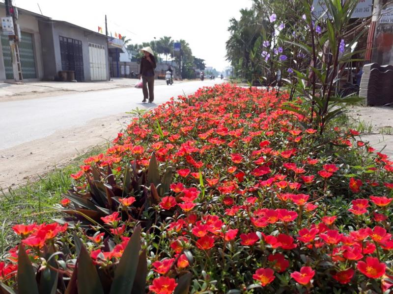 """Những con đường hoa mang tên """"đường hoa phụ nữ"""" không chỉ làm đẹp mỹ quan đô thị nó còn thấm đượm tình đoàn kết, sự cần lao của người dân nơi đây."""