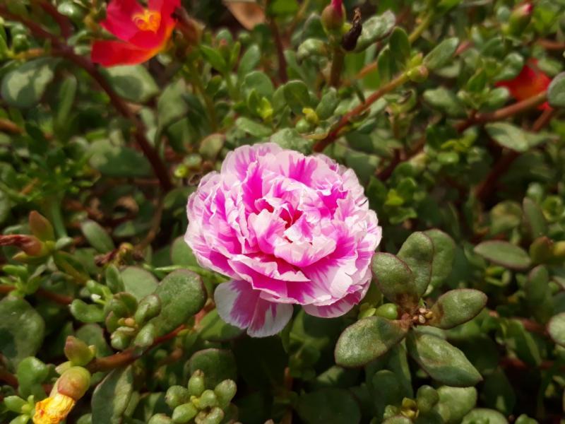 Loại hoa được chọn để trồng chủ yếu là hoa mười giờ được nhập từ Đà Lạt. Đây là loại hoa rất dễ trồng và chăm sóc.