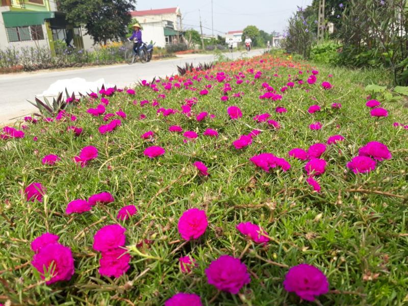 Những con đường hoa không chỉ làm đẹp còn góp phần bảo vệ môi trường xanh – sạch – đẹp.
