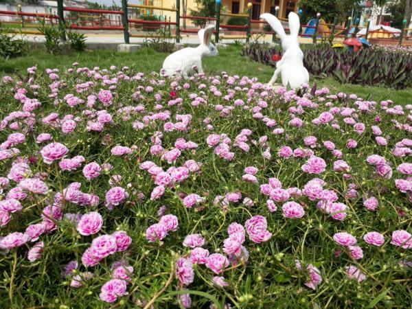 Hoa không chỉ trồng ở những con đường làng, mà còn được trồng ngay trong khuôn viên cơ quan, công sở, trường học…