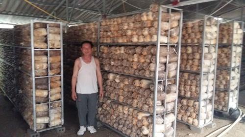 Trang trại nấm thu hàng tỷ đồng của ông Bình.