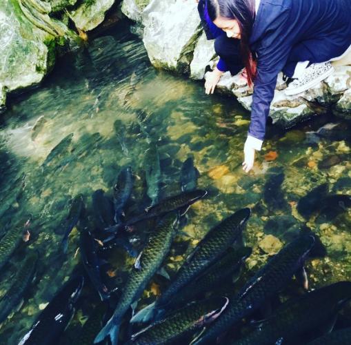 Mùa cạn, lòng suối Ngọc chỉ sâu 20-40 cm, nước trong vắt, có thể đưa tay xuống nước vuốt ve những con cá. (Nguồn: @hoangnguyet.minh)