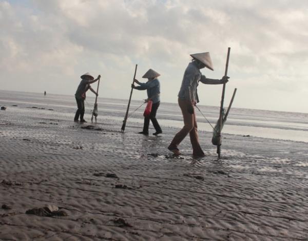 Nghề nạo ngao ở ngôi làng ven biển Sầm Sơn (Nguồn: samson.vn)