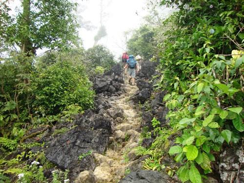 Đường lên bản Bá dốc dài, phải xuyên qua rừng già âm u. (Nguồn: Dũng Ninh)