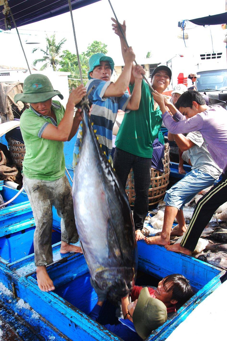 Cá ngừ đại dương về bến Tuy Hòa.
