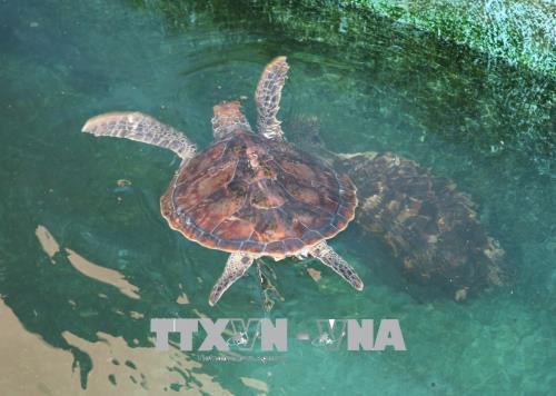 Khu vực cứu hộ, bảo tồn rùa biển tại Vườn quốc gia Núi Chúa.
