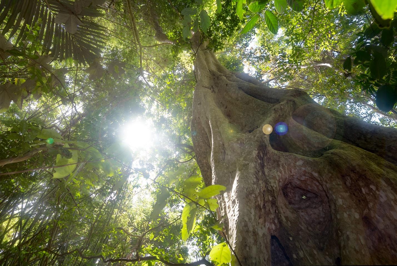 Nét đẹp rừng núi thoắt ẩn thoắt hiện ở núi Tà Cú