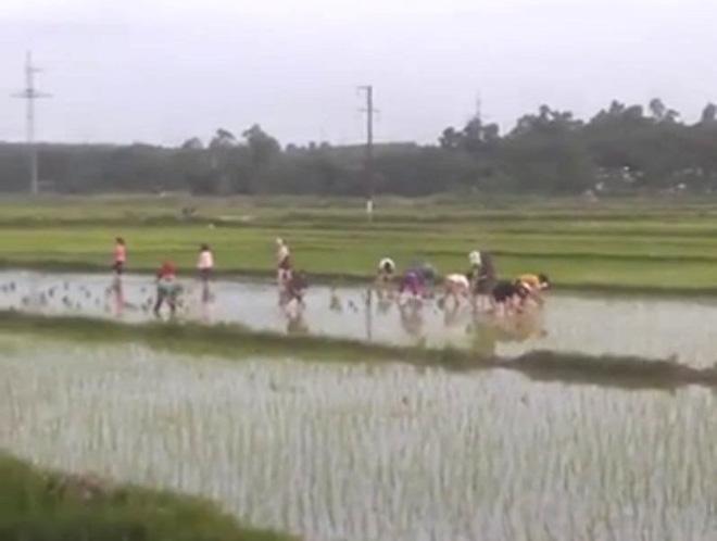 Có khoảng 30 nữ công nhân đã xắn quần xuống ruộng giúp cụ ông cấy lúa. Ảnh: Các nữ công nhân cung cấp.