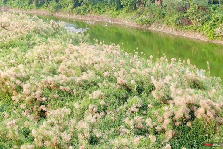 Những dải đất phù sa phủ đầy hoa lau.