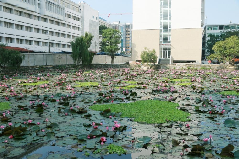 Nước hồ Tiền luôn trong xanh, sạch sẽ vì sinh viên không được xả rác xuống hồ.