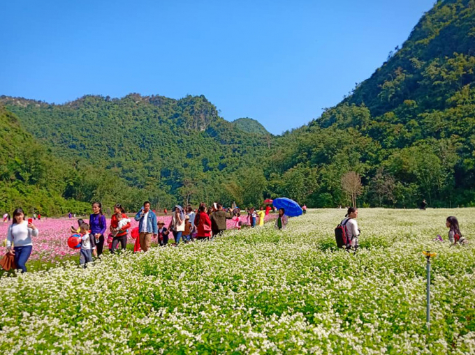 Các loài hoa với màu sắc rực rỡ cho du khách tham quan, trải nghiệm và chụp ảnh.