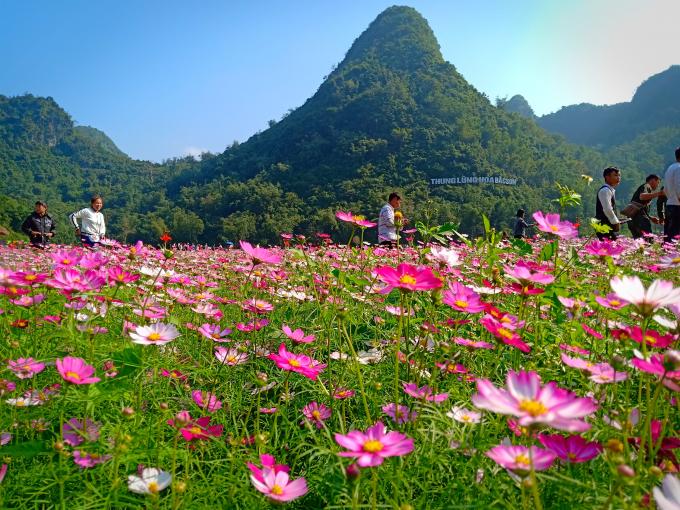 Ngỡ ngàng vẻ đẹp Thung lũng hoa Bắc Sơn xứ Lạng