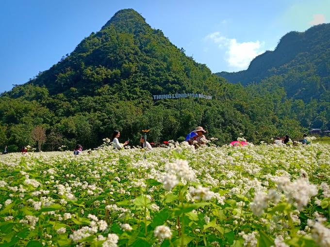 Các loại hoa được trồng như: Hoa cánh bướm, hoa tam giác mạch, hoa bách nhật thảo…