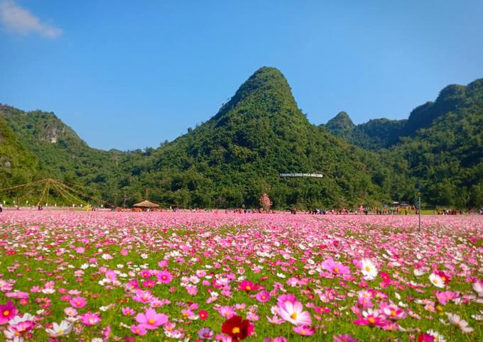 Cả một vùng Thung lũng rộng lớn gần 20ha được phủ kín bởi các loài hoa.
