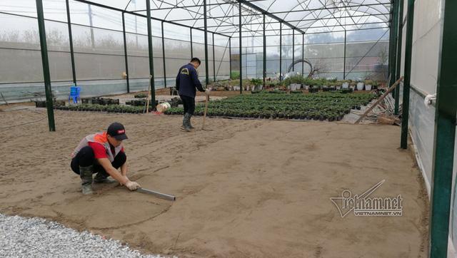 Khoảng 1000m2 dâu tây được trồng trong nhà kính