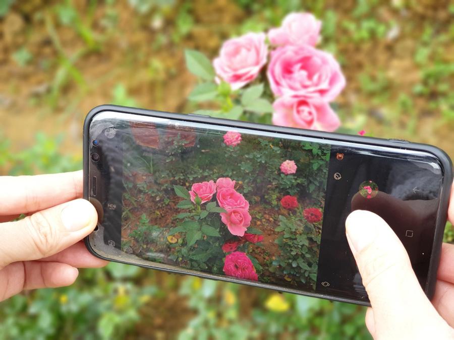 Du khách vô cùng hào hứng chụp cận cảnh để lưu lại những khoảnh khắc tuyệt đẹp của những đoá hồng mới nở.