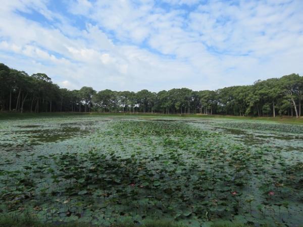 Ao Bà Om với hàng cây cổ thụ bao bọc bốn mùa xanh mát
