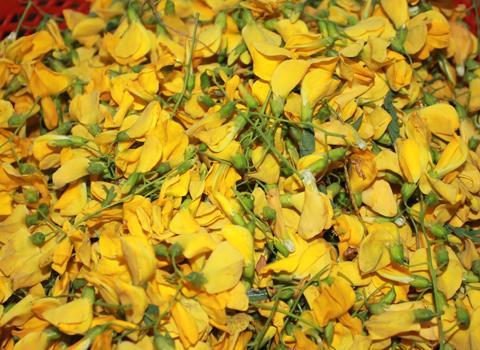 Hoa điên điển có hương vị rất đặc biệt, có độ giòn, thơm, bùi, béo lại nồng đượm hương, mang màu sắc