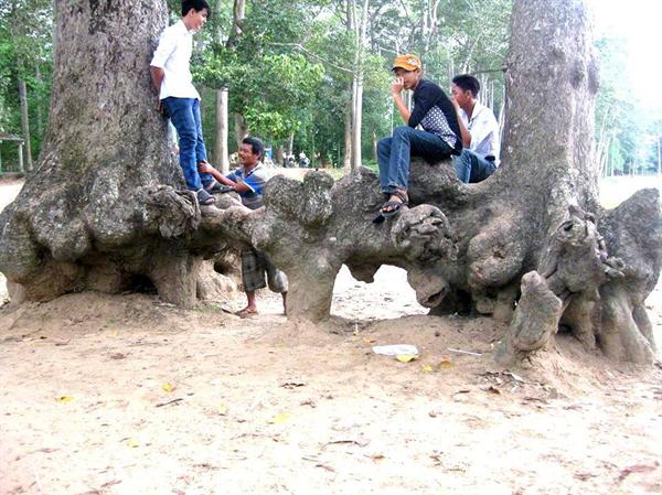 Những cây cổ thụ hàng trăm năm tuổi nổi lên nhiều hình thù kỳ thú.