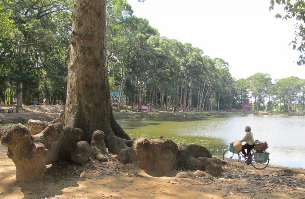 Những gốc cây với hình thù kỳ lạ tại ao Bà Om
