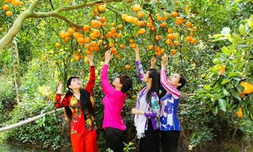 Thay vì phải thu hái trái cây cho thương lái, nhiều chủ vườn ở miền Tây mở cửa cho du khách đến tham quan và thưởng thức tại vườn. Ảnh: Vntrip.