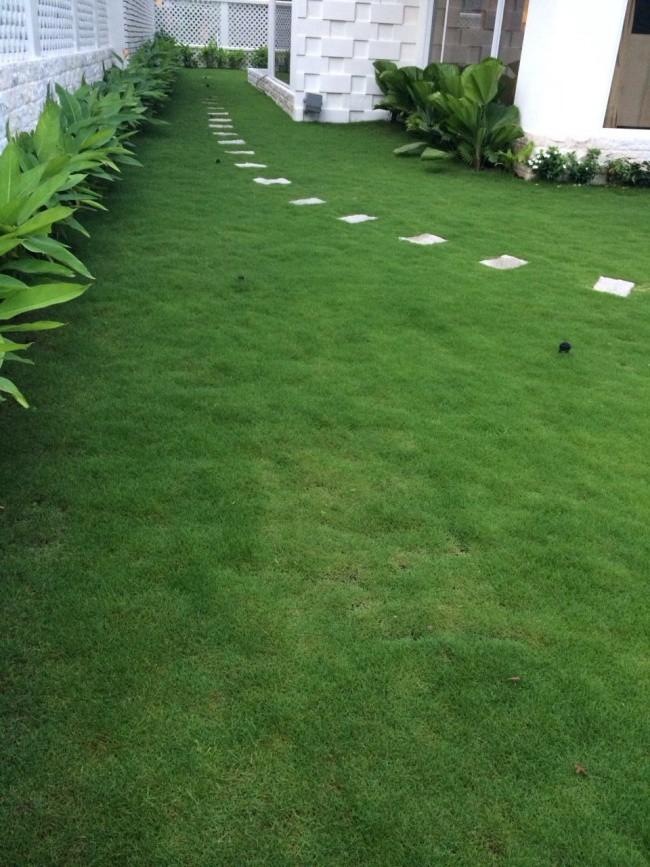 Lối cỏ xanh tươi, đẹp bình yên trong căn biệt thự của cặp vợ chồng nổi tiếng.