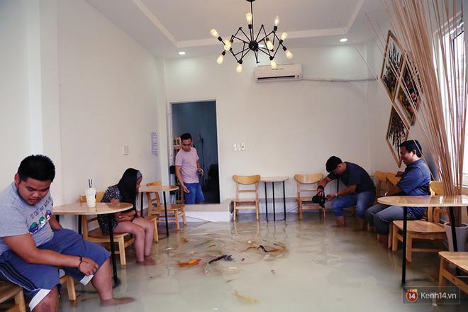 Cafe có cá bơi dưới chân khách đang là điểm đến thu hút giới trẻ.