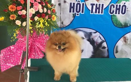 Hội thi chó đẹp lần đầu tổ chức tại Vĩnh Long.