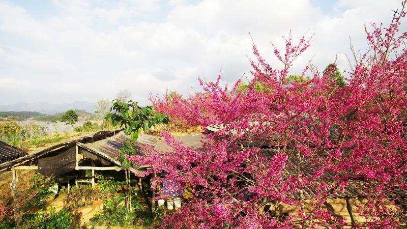 Cách trung tâm thành phố Điện Biên khoảng 20 km, hồ Pá Khoang thuộc huyện Điện Biên, nằm kề quốc lộ 279. Nơi đây thu hút du khách với đảo nhỏ nằm ngay trung tâm hồ. Giống hoa anh đào trồng trên đảo có nguồn gốc từ Nhật Bản, được gieo trồng cách đây hàng chục năm và nở rộ từ đầu tháng 1.
