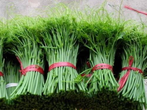 Su su là đặc sản ở Tam Đảo. Rất nhiều gia đình đã làm giàu từ loại rau nà
