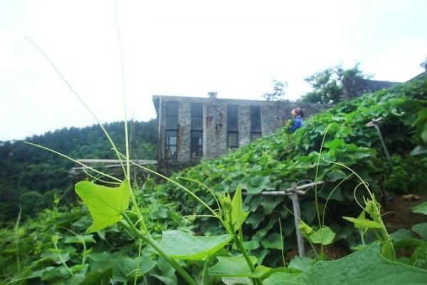 Ngôi nhà nằm ở lưng chừng đồi, được bao phủ bởi giàn su su xanh mát. (Nguồn: Vũ Minh Quân).