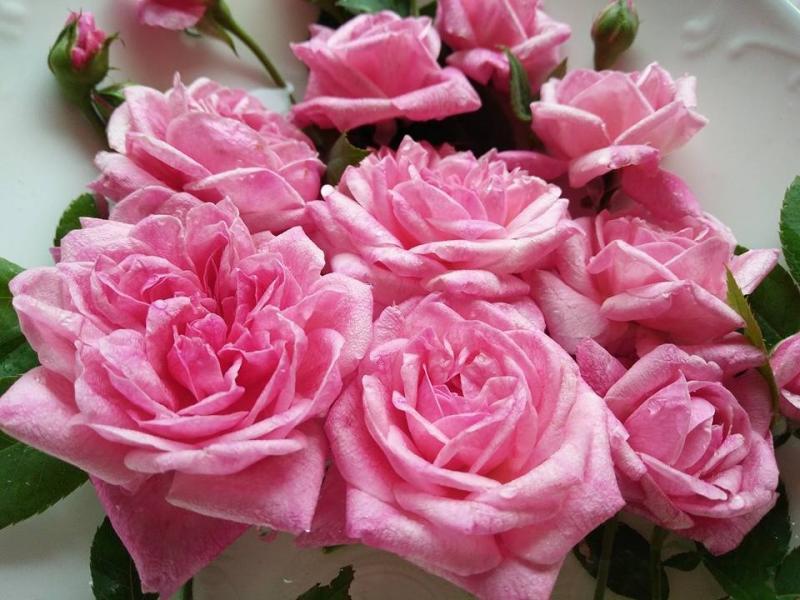 Nhừng cành hồng được cắt ở ban công.