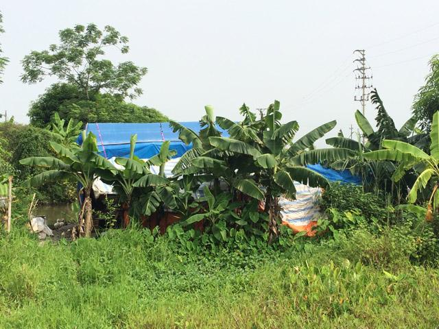 Túp lều nhà bà Xuân mới được một tổ chức từ thiện đến tu sửa giúp cách đây 3 tháng.
