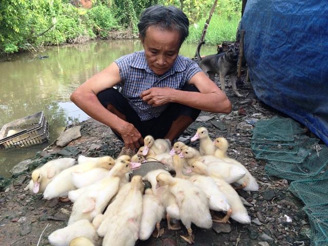 Bà Xuân đang cầu mong về một lứa vịt khoẻ mạnh để có đồng ra, đồng vào trang trải cuộc sống.