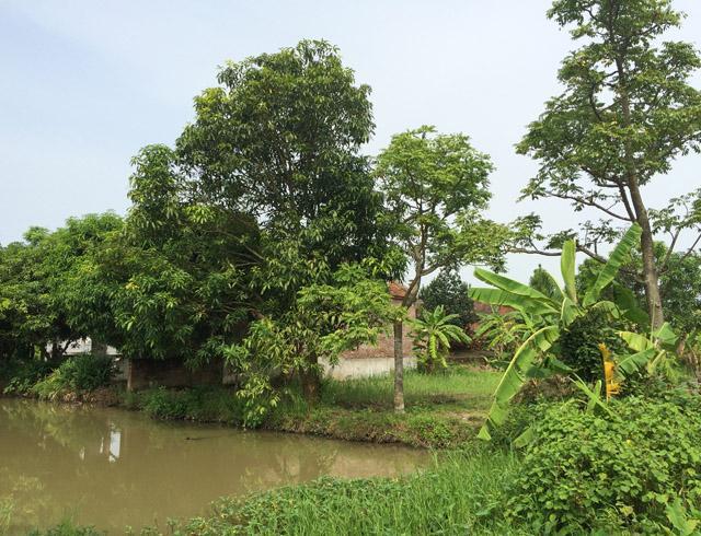 Gốc cây xoài cạnh chùa là nơi mà gia đình bà Xuân thường xuyên lui tới để tránh đi sự nóng nực trong túp lều.