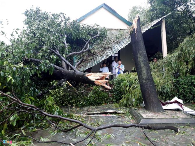 Cây gãy đổ trong bão số 10 (Ảnh: Điền Bá Quang - Zing News)