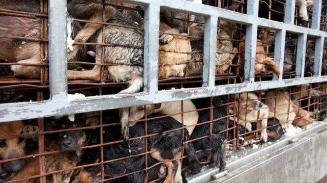 Thịt chó rất phổ biến ở Việt Nam...